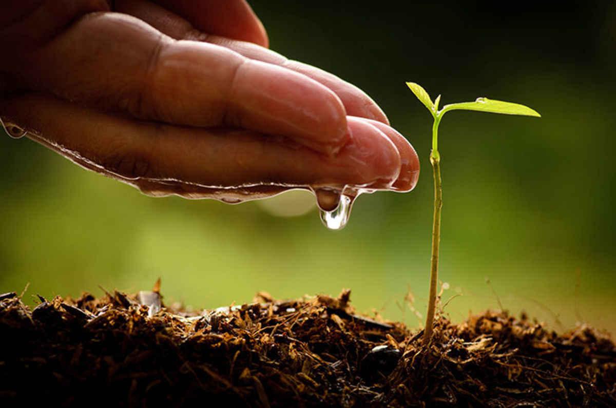 Planrting seeds
