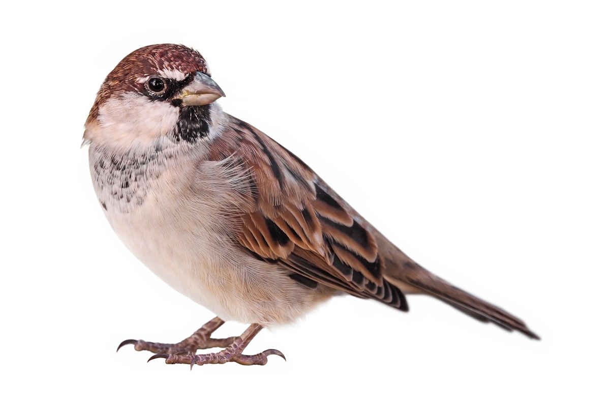 The story of a sparrow - Angelus News - Multimedia ...