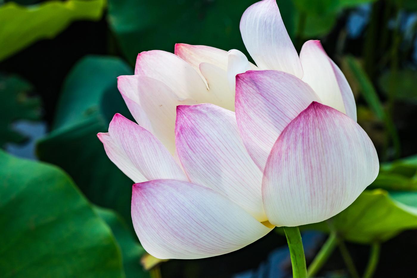 Las Lotus Thief Angelus News Multimedia Catholic News