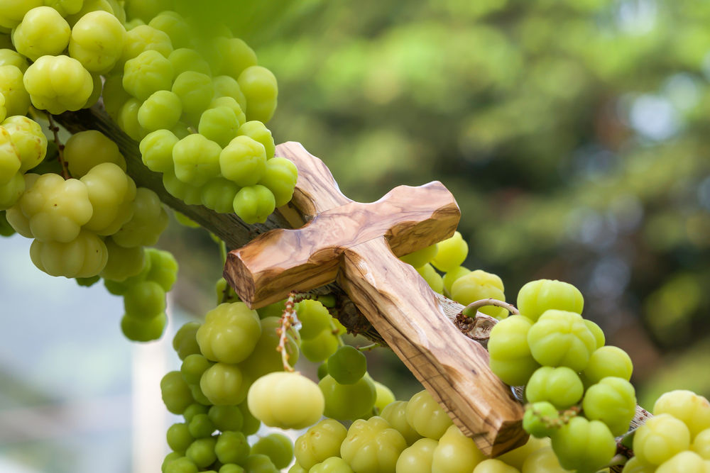 Achievement versus fruitfulness | Angelus News